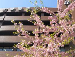 """お知らせ詳細:""""初桜""""春を告げ開..."""